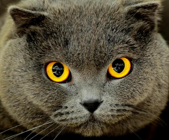 Cat Eye On Round Eyes